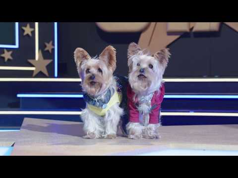 Pup Star: Better 2Gether (2017) Official Trailer