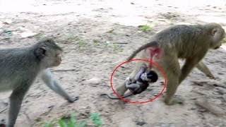Help Me Help Me Mum Please Baby Monkey Cry Loudly Cos Mum Doesn't Help Him ST443 Mono Monkey