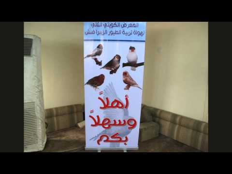 king13870 - لقاء مع الهواة المحترفين- بو فيصل