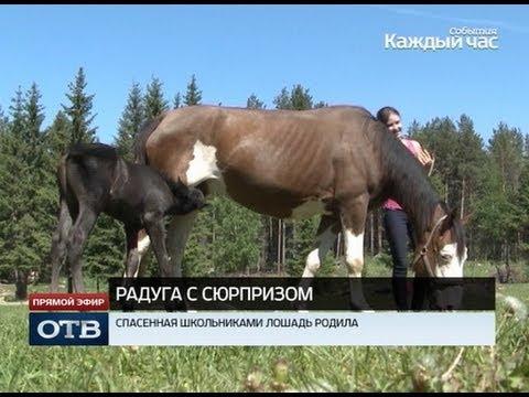 Верх-нейвинские школьницы спасли беременную лошадь от скотобойни