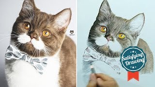 Realistic Drawing - Gringo Mustache Cat