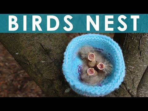 How To Knit A Bird Nest For Wildcare: Summer Knit Series video