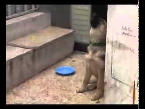 Собака отвечает на Азан