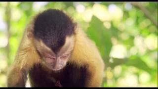Amazonia. Przygody małpki Sai online cda chomikuj zalukaj bez limitów (zobacz opis)