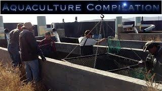 Aquaculture, Fish Farm Compilation