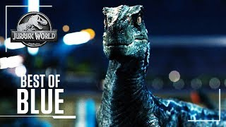 Best of: Blue | Jurassic World