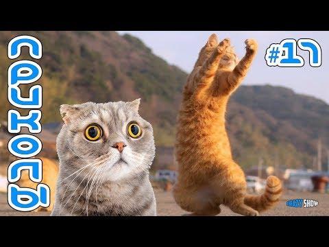 КОТЫ И КОШКИ 2019 Смешные коты приколы с котами до слез – Смешные кошки   приколы с животными