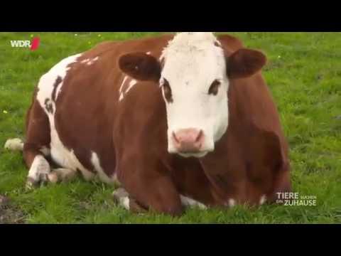Tiere finden ein neues Zuhause - Das 'kuhle' Leben auf Hof Butenland