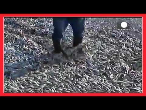 MILLIONS OF FISH DIE IN CHILE - April 2016 End Times Signs