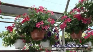 Çiçek yetiştirmenin püf noktaları - Oasis Çiçek Peyzaj
