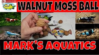 HOW TO MAKE MOSS BALLS WITH A WALNUT 🍑