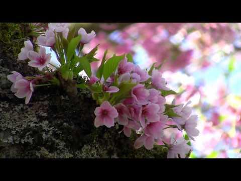 Beautiful Nature Spring 1080p HD