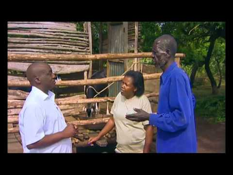 Shamba Shape Up (English) - Push-Pull, Goat Care, Making Silage Thumbnail