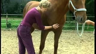 Sehenswert ! Cranio-Sacrale-Therapie eines Pferdes mit Andrea Mais