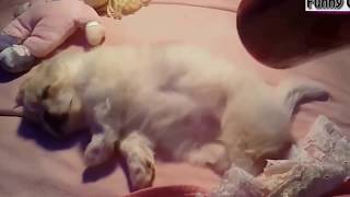Funny Videos Funny Animal Cute Puppies Dogs Compilation 2018 || arabic funny video