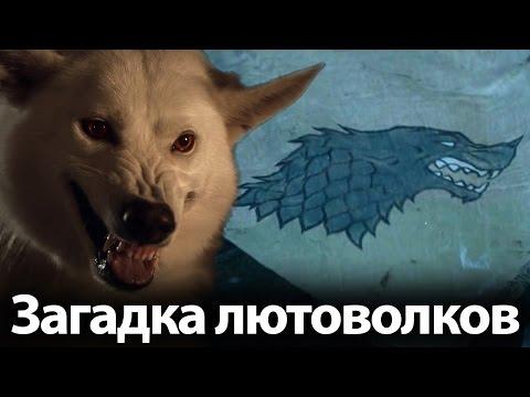 Загадка лютоволков Старк. Возвращение 7 сезона. Кто еще умрет в Игре престолов?