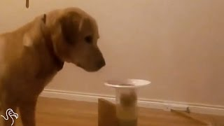 Dog Figures Out GENIUS Way To Get A Drink Of Water