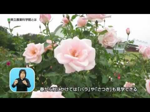 画像:動画サムネイル