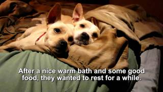 Stanley & Luna - These two dogs WILL MAKE YOU SMILE!  (we found them a home - TOGETHER!!)