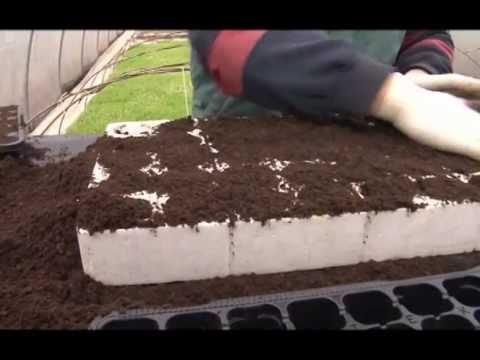 Setva i zastita semena prilikom proizvodnje rasada, Agromarket - U nasem ataru 415.wmv