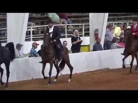 World Racking Horse Celebration 2014 Keg Shod Speed