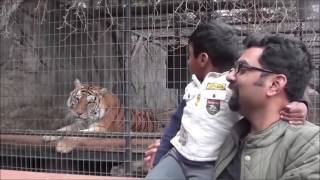 Try Not To Laugh: Animals Scare People