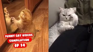 Funny Cat Videos Try Not to Laugh or Grin Ep 14
