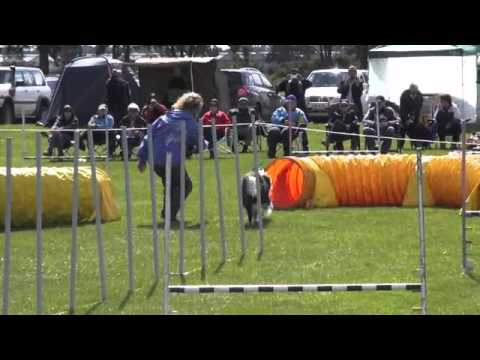 Top Dog Agility 2012