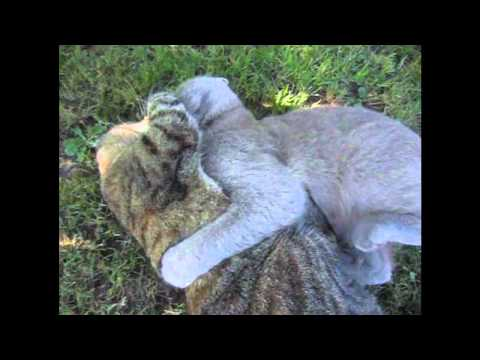Funny Slowmotion catfight 1