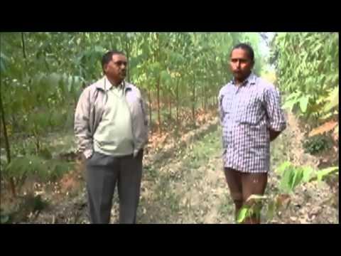 Farmer Says Yash Agro Helped Him Grow Eucalyptus [Hindi]