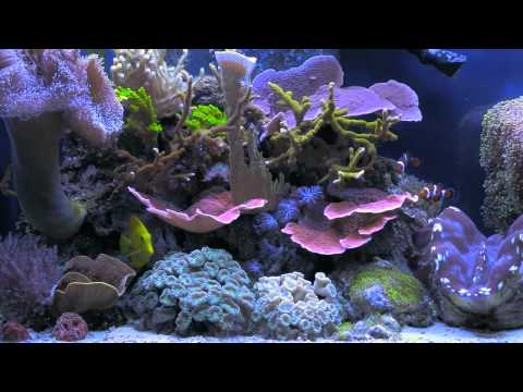 Building artificial corals and coral reef aquarium for Artificial coral reef aquarium decoration inserts