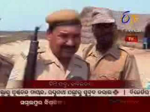 E TV Orissa News On Olive Ridley Turtles