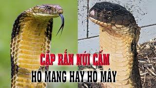 Người nhốt cặp rắn Hổ Mây có thoát tội khi quy định chỉ nói về Rắn Hổ Mang