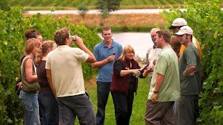 Melbourne - Yarra Valley and Winery Tour