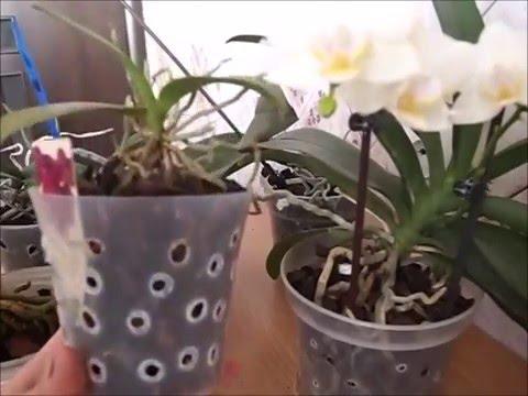 Уход за орхидеями в домашних условиях после