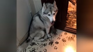 Mischievous Dog Destroys Owners Home After Finding Calligraphy Ink