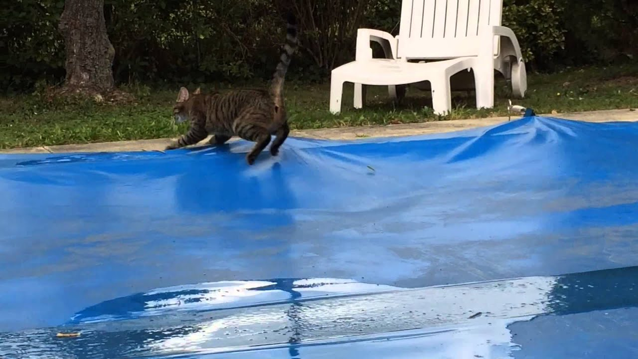 Kit et la b che de la piscine youtube for Piscine trevi