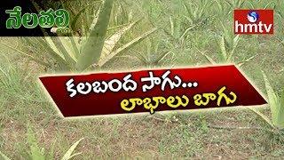 Aloe Vera Farmer Rajashekar Success Story | Peddapuram | Nela Talli  | hmtv