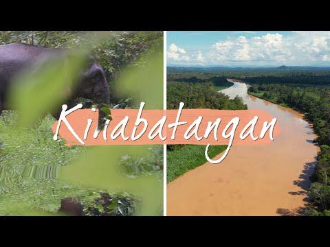 Wilder Elefant im Dschungel Borneos • Malaysia • Weltreise-Vlog 26
