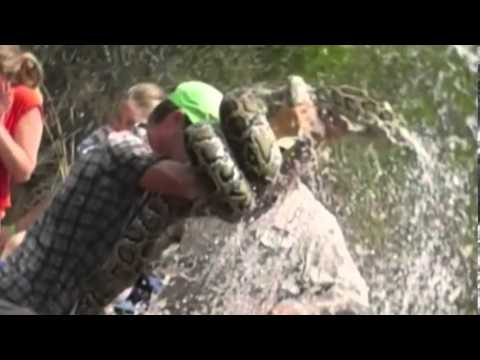 Гид убил трехметрового питона, спасая туристов/Guide killed three-meter python, saving travelers