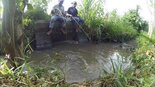 Mancing ,Tarikan ikan di selokan bikin greget di daerah sleman yogyakarta