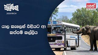 Neth Fm Balumgala 2020-09-24