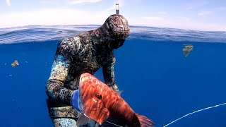 Spearfishing for Great Dinner Offshore