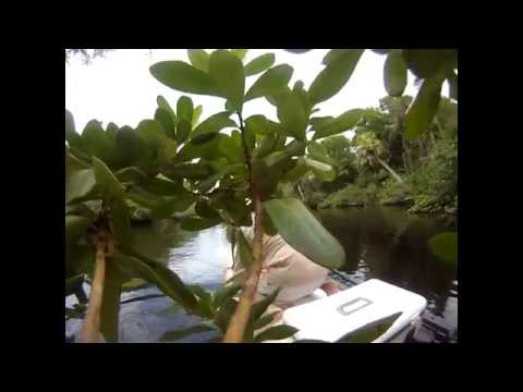 Stand up paddle board fishing for snook