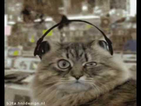 forro do  gato - melo  do  gato (gata devoradora)