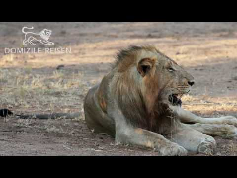 South Africa by Domizile Reisen Fine Rentals