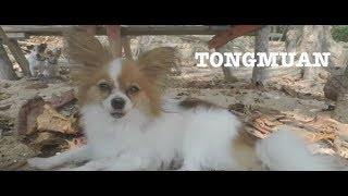 Dreamkation: Travel with Katalliyah - EP 5 Annual Dogs Trip Chanthaburi 2018 Part 1