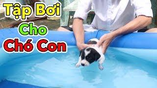 Lâm Vlog - Chó Con Có Biết Bơi Hay Không | Tập Bơi Cho Chó Con Mới Đẻ