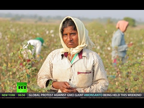 Indian nightmare: GMO killer-cotton (RT Documentary)