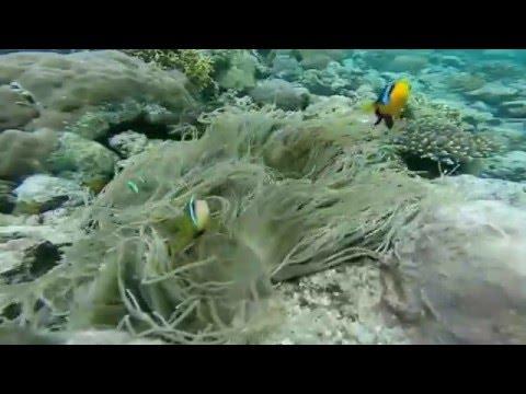 Solomon Islands Coral Reefs